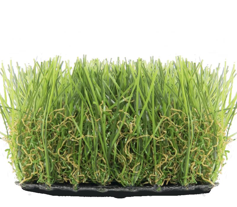 Superlawn 45 summergraze Image 3961